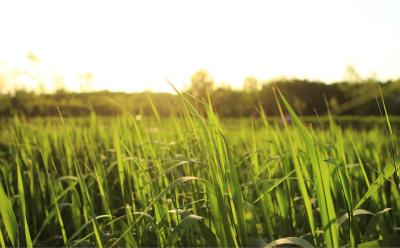 前期亚瑟蹲草丛对线东皇